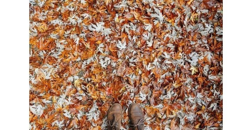 Tendencias de calzado de otoño: ¿Qué se llevará este otoño-invierno?